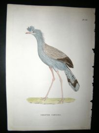 Shaw C1800's Antique Hand Col Bird Print. Crested Cariama